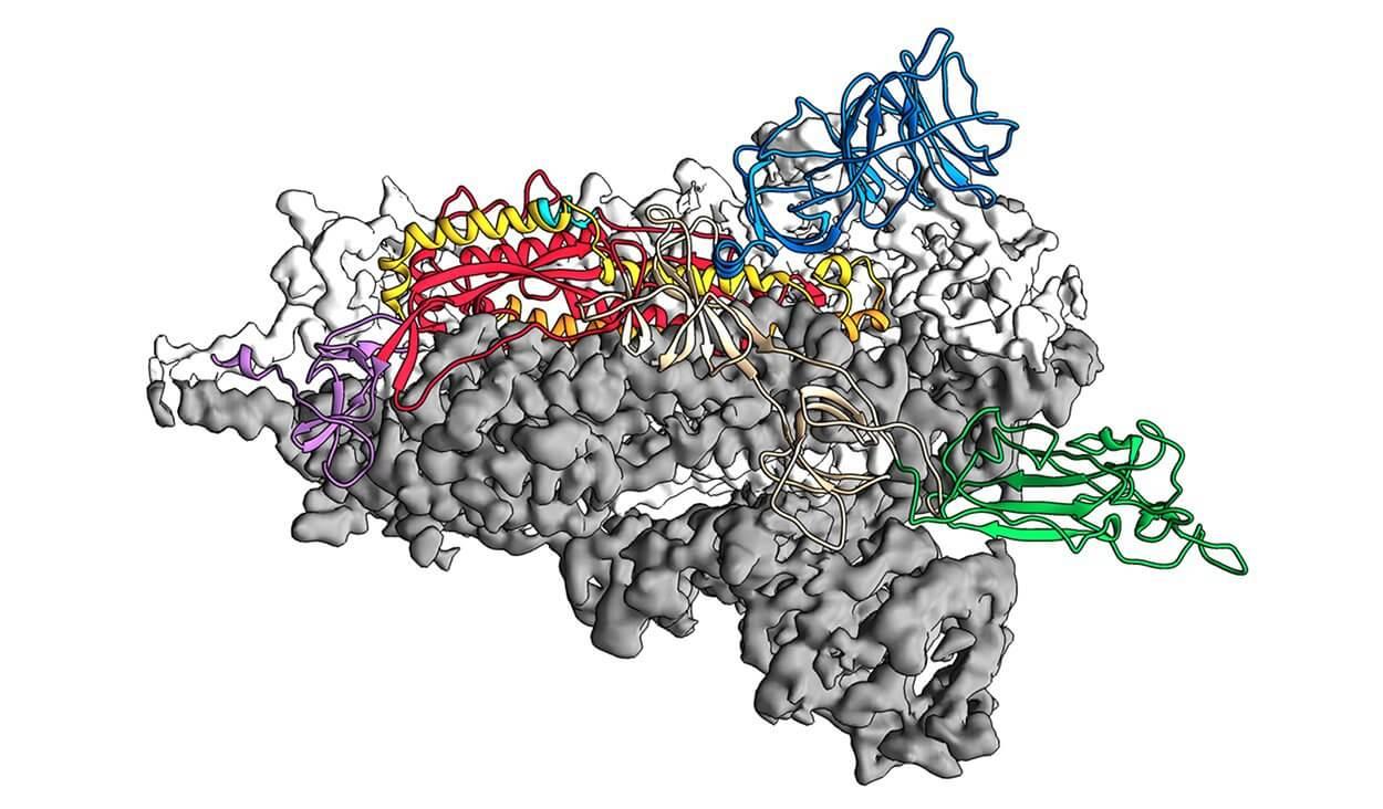 3-D-Struktur Spike-ProteinsSars-CoV-2