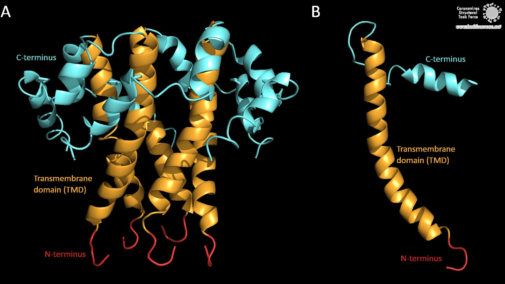 SARS-CoV E-Protein